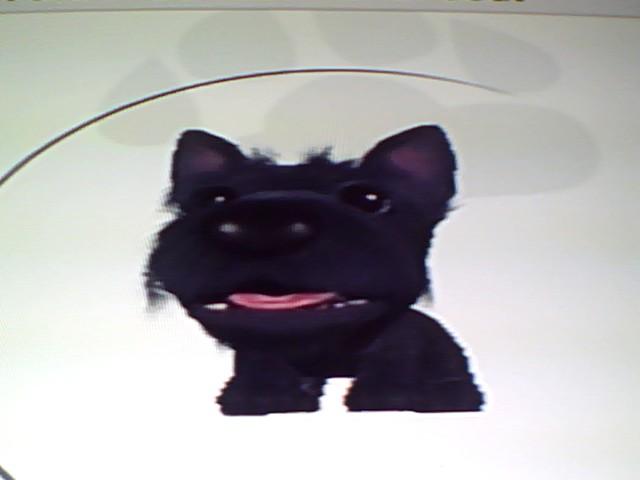 File:37 Scottish Terrier.jpg