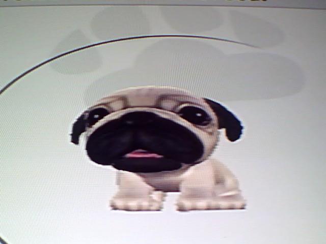 File:12 White Pug.jpg