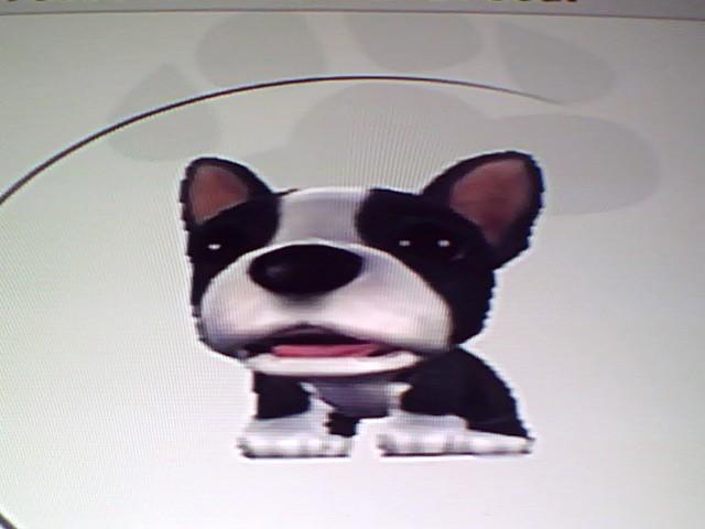 File:17 Boston Terrier.jpg