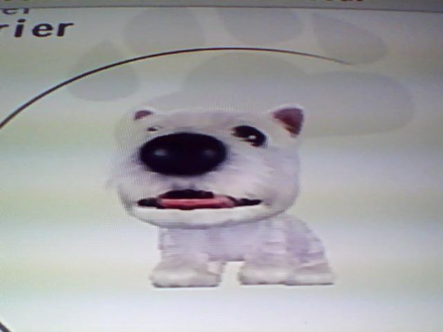 File:31 White Terrier.jpg