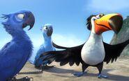 Rio-Review-The-Film-Pilgrim-Blu-Jewel-and-Rafael
