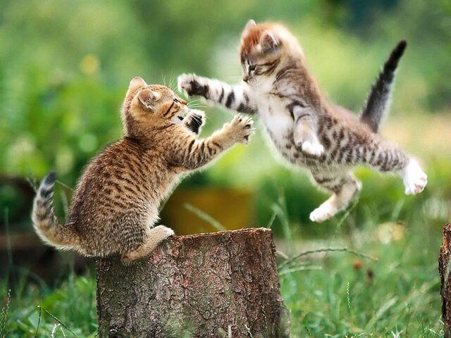 File:Kittens playing.jpg