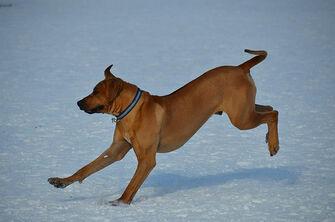 Aspen Dogs