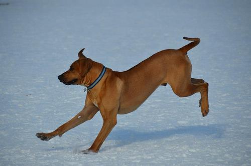 File:Aspen Dogs.jpg