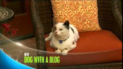 Dog With a Blog - Cat With A Blog - Promo