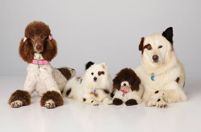 File:Stan's Dog Family.jpg