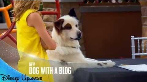 Dog On a Catwalk - Promo
