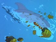 Shark's defeat