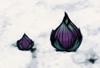 Fleshy Bulbs.png