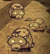 Several Baby Beffalo