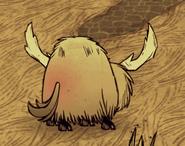 Beefalo in heat
