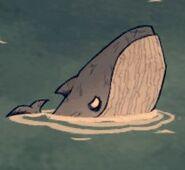 Blue whale pic