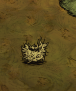 MooseGoose nest empty