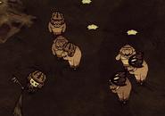 Spiderhat-pig