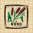 File:Reed.png