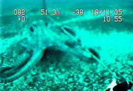 File:Blue octopus.jpg