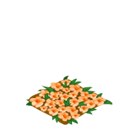 Orange Flower Bed