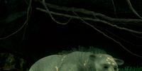 A Bear to Cross