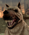 Dog2DAII.png