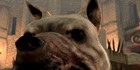 Dog (Dragon Age II)