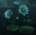 Dawn Lotus.png