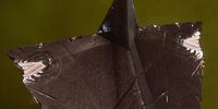 Darkspawn Alpha Shield Schematic (Tier 3)