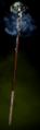 DAI Frostbite Staff mp.png
