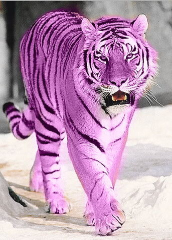 File:PurpleTiger.jpg