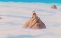 MountainDB(CellSaga)