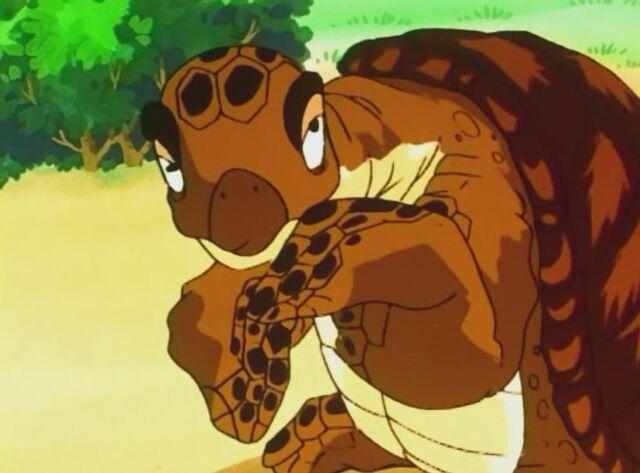 File:Turtle 3.jpg