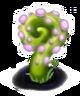 Purple Snail Plant