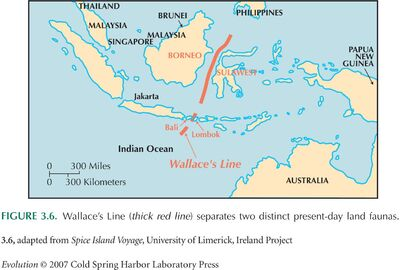 Wallace's line