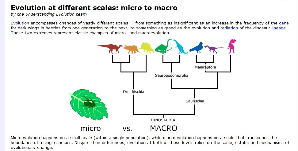 micro and macro evolution notes Usage notes the term microevolution was introduced to distinguish small-scale patterns of evolution from extinction and large-scale factors, which are termed.