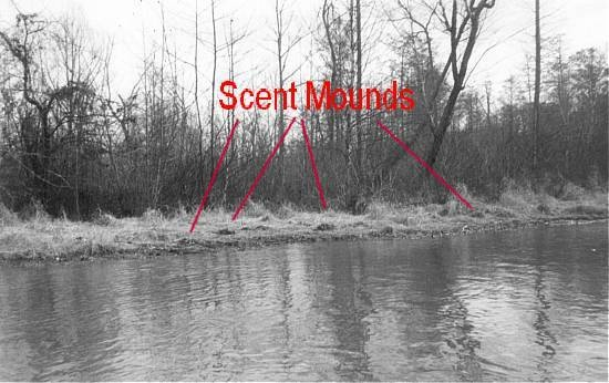 File:Scent mounds.jpg