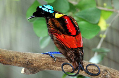 8-display-bird-paradise