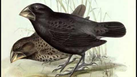 Darwin, Finches, and Hawaii