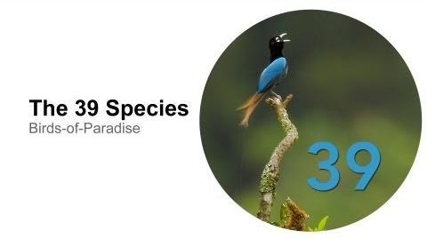 The 39 Species-0