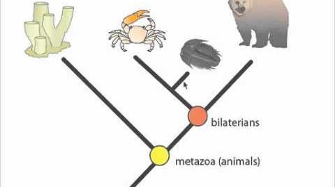 Understanding Phylogenetic Trees-0