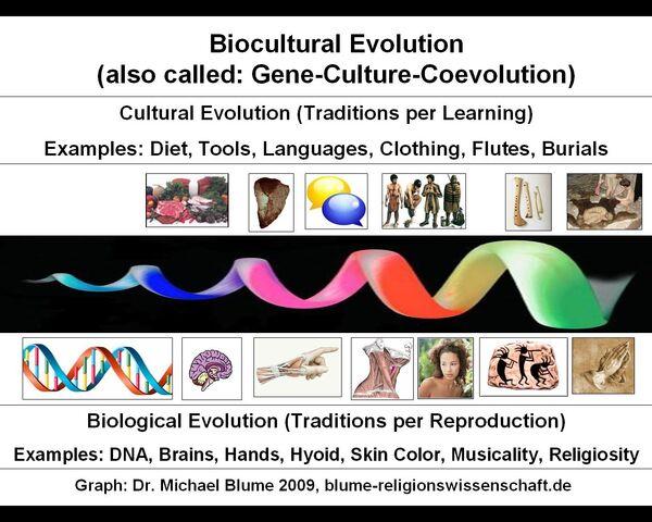 File:BioculturalEvolution.jpg