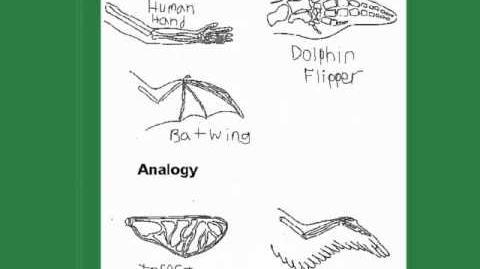 Homologous vs Analogous Traits Evolution series pt1