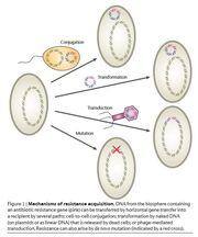 Gene transfer1