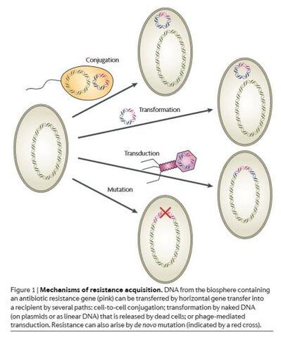 File:Gene transfer1.jpg