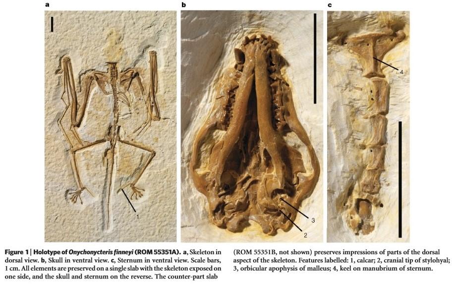 Bat fossil Onnychonycteris finneyi