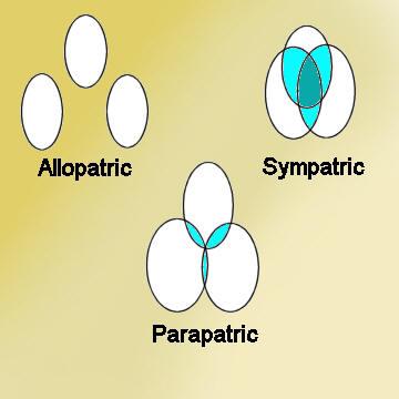 File:Allopatric.jpg