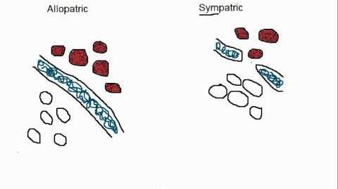Biology Allopatric vs Sympatric Speciation