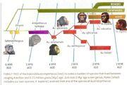 Human-familytree