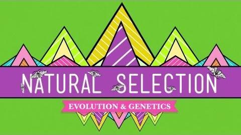 Natural Selection - Crash Course Biology 14