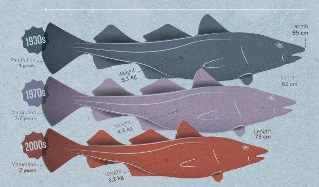 File:Fish4.jpg