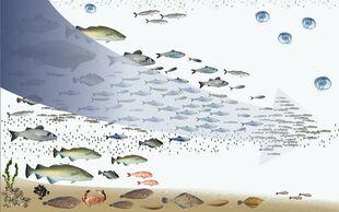 Fishing-down-foodweb