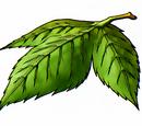 Yggdrasil leaf